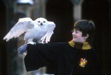 哈利·波特与他的猫头鹰